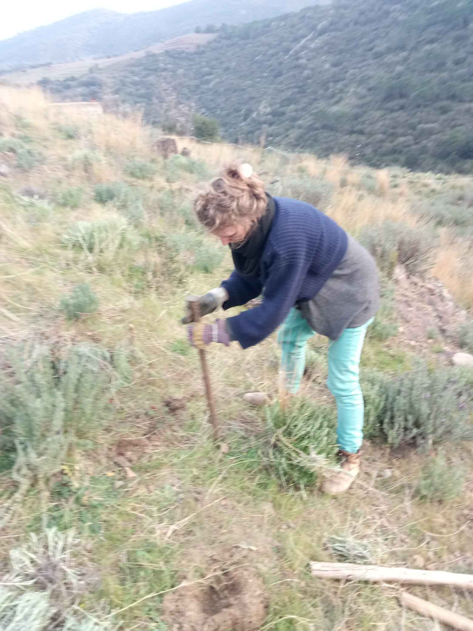Planting the forbidden vines.